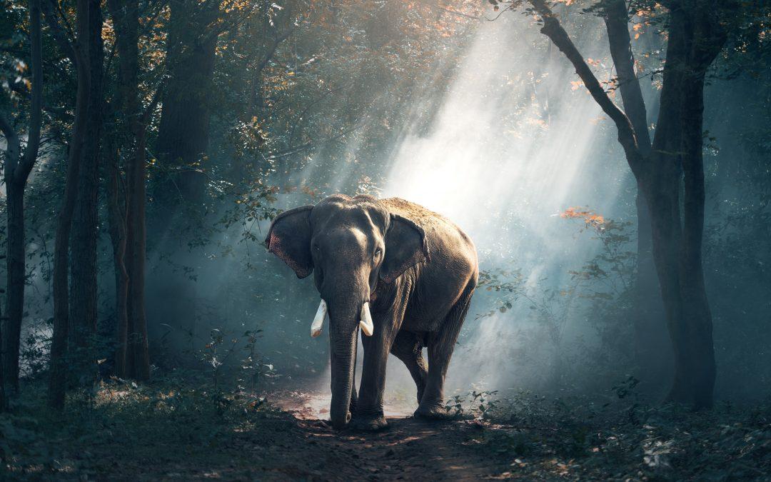 Saham Big Cap: Ketika 'Gajah' Disuruh 'Geser' Dikit.